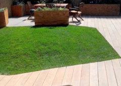 Етапи при озеленяването на двора и градините